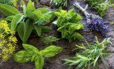 Evde Yetişebilen  12 Sağlıklı Bitki