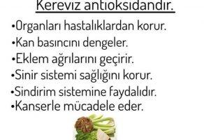 Kereviz Antioksidandır