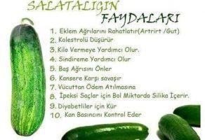 Salatalıgın Faydaları