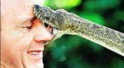 Yılanlar ve Yılan Sokması