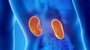 Böbrek Enfeksiyonları: Semptomlar ve Tedaviler