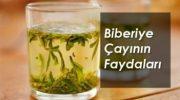 Defne Yaprağı Çayının Faydaları, Zararları, Hazırlanışı