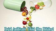 Doğal Antibiyotik Etkisi Olan Bitkiler !