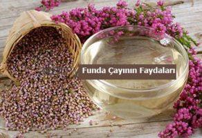 Funda Çayının Faydaları – Funda Çayı Yararları-Funda Çayı Zayıflatırmı
