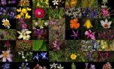 Bitkiler Cildimizi Nasıl Temizler