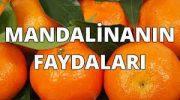 Mandalina Faydaları Nelerdir?
