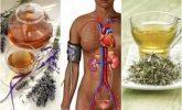 Bu 5 Bitkisel Tedavi İle Kan Basıncınızı Düşürün