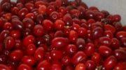 Kızılcık Meyvesinin Faydaları-Kızılcık Mersini Suyu Yararları