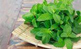 Faranjite İyi Gelen Bitkiler, doğal tedaviler