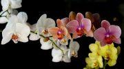 Orkide Çiçeği Ne Anlama Geliyor? İnceleyelim