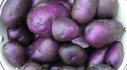 Mor patatesin faydaları nelerdir?